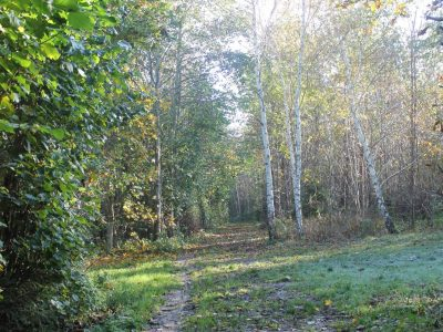 skoven efterår